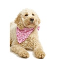 Valentines Love Dog Bandana 4