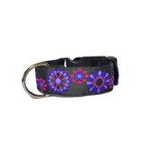 Pet Pooch Boutique - Sunset Dog Collar