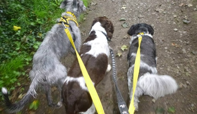 Happy Pants Dog Walking and Pet Sitting Services 3
