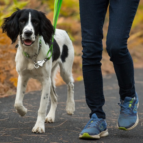 Chain Reaction Dog Collar - Meadow Green 2