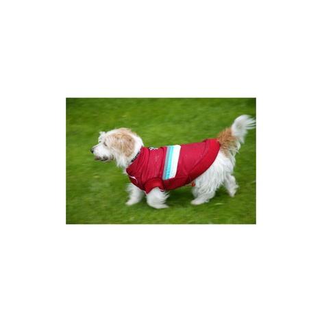 Red Bomber Dog Jacket 3