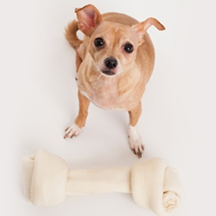 SHOP FOR YOUR CHIHUAHUA