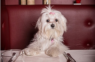 Pet-Friendly Pubs & Restaurants