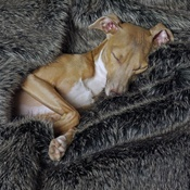 Charley Chau - Faux-Fur & Fleece Dog Blanket - Charcoal