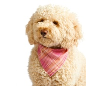 Pet Pooch Boutique - Pink Burberry Dog Bandana