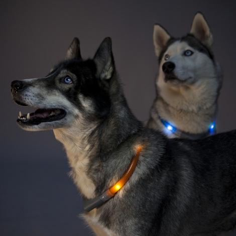 Premium Leuchtie LED Collar - Neon Green 2