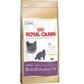 British Short Hair 34 Cat Food