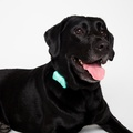 Wonderwoof Bow Tie Activity Tracker – Teal 2