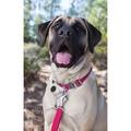 Hoopie Dog Collar - Wild Berry 4