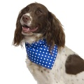 Blue Polka Dot Dog Bandana 3