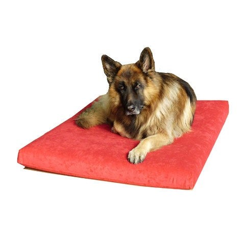Foam Dog Bed - Nutmeg 2