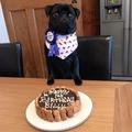 Dog Birthday Cake 4