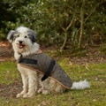 Outdoor Worcester Dog Coat - Green 2