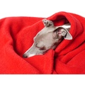 Double Fleece Dog Blanket - Red 2