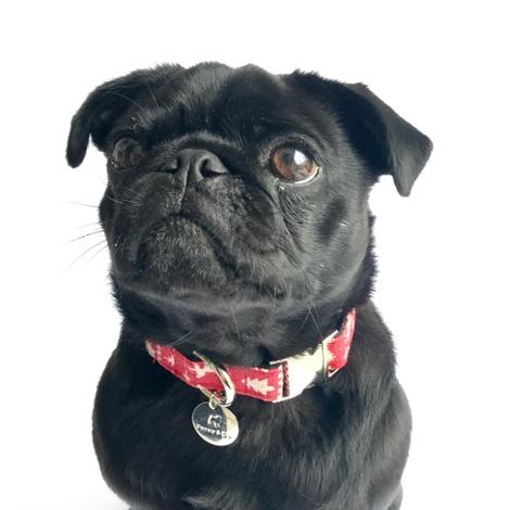 Dog Collar - Finland  2
