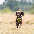 Comfort Dog Harness – Green 4