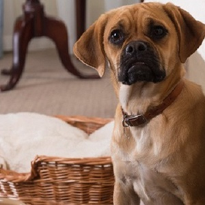 Pet friendly hotels devon