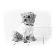Photo Effects - Sketch Effect Personalised Artwork of your Pet