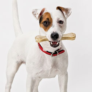 SHOP FOR YOUR JACK RUSSELL
