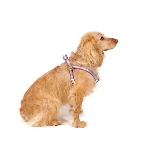 Reflective Bold Dog Harness – Purple