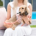 Stripe Pom Pom Dog Harness 5