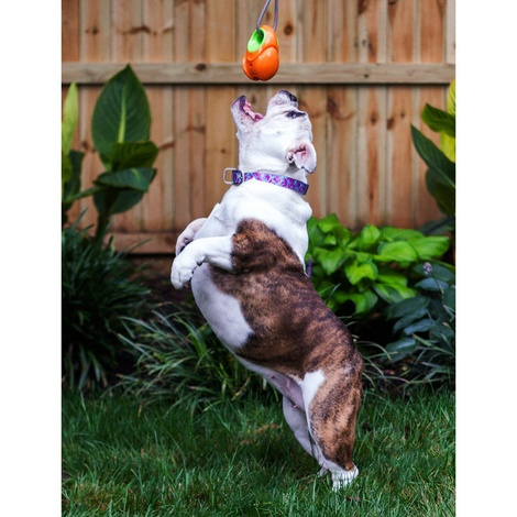Gripple Dog Toy – Orange 2