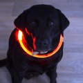 Flashy Fido LED Dog Collar 2