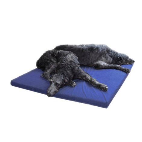 Foam Dog Bed - Bluebell 2