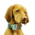Dog Collar Bow Accessory - Sea Spray