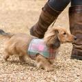 Macaroon Check Dog Harness 3