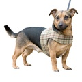 Balmoral Tweed Dog Harness 5