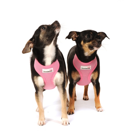 Airmesh Dog Harness – Pink 3