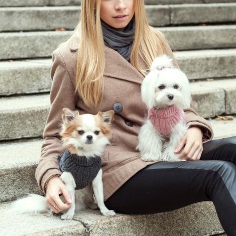 Aspen Dog Pullover - Grey 4
