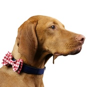 Love from Lola - Dog Collar Bow Accessory - Gingham