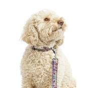 Pet Pooch Boutique - Kaliko Dog Collar
