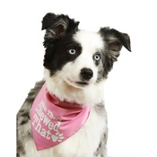 Pet Pooch Boutique - Been There Chewed That Dog Bandana – Baby Pink
