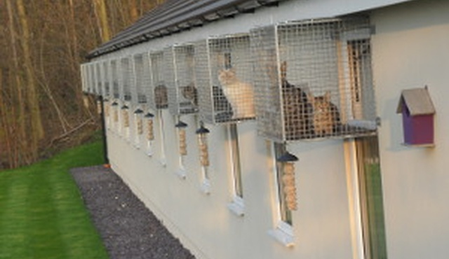 The Ings Luxury Cat Hotel 8