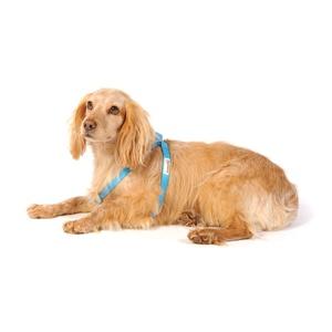 Bold Dog Harness – Cyan