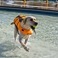 Life Jacket for Dogs - Orange 6
