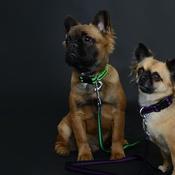 Reg&Bob - Green Dog Collar