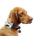 Dog Collar Bow Accessory - Polka Dot