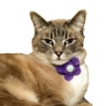 Bloom Cat Collar Flower Accessory - Lavender & Duck Eg