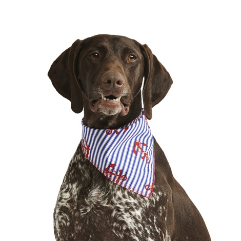 Anchors Away Dog Bandana