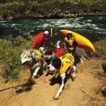 Ruffwear K-9 Float Coat - Dandelion Yellow 2