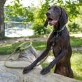 Comfort Rope Dog Lead – Green 4