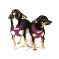 Airmesh Dog Harness – Purple 3