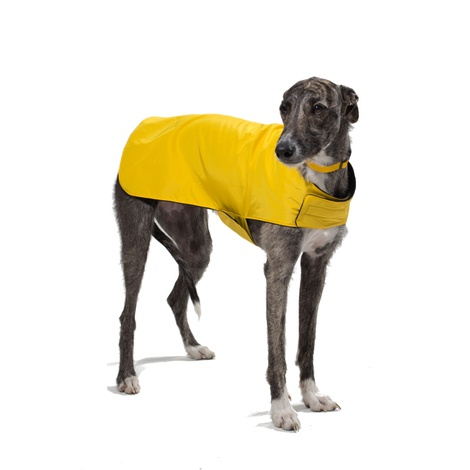 Pawditch Yellow Dog Coat 6