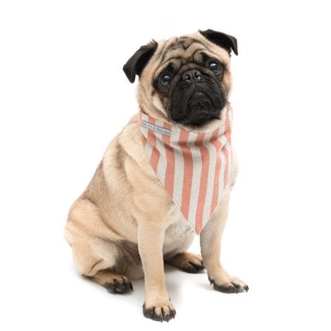 Orange Stripe Brushed Cotton Dog Bandana