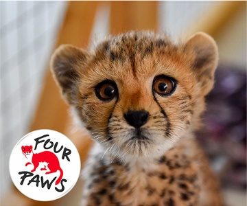 Four Paws Animal Rescue