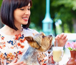 Inspiration 8: Dine with Your Dog